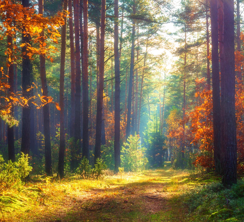 podzimni-les-slunce-listi